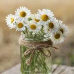 daisies-vase